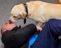Не скажу, что Матюшин наконец-то полюбил собак, но этот ретривер к Дмитрию явно неравнодушен